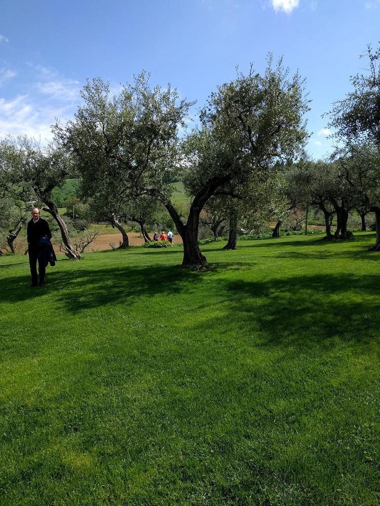 Vallefoglia - olijfboomgaard van de Terra del Vento