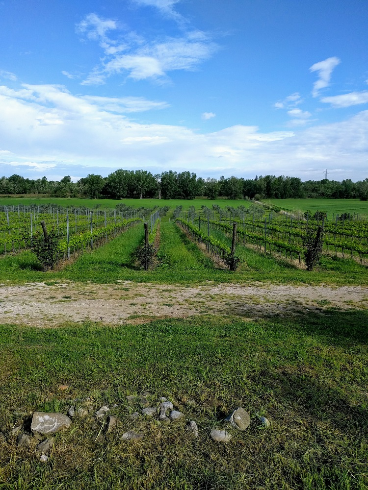 Santarcangelo - Collina dei Poeti - wijngaard